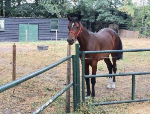 Een paard alleen