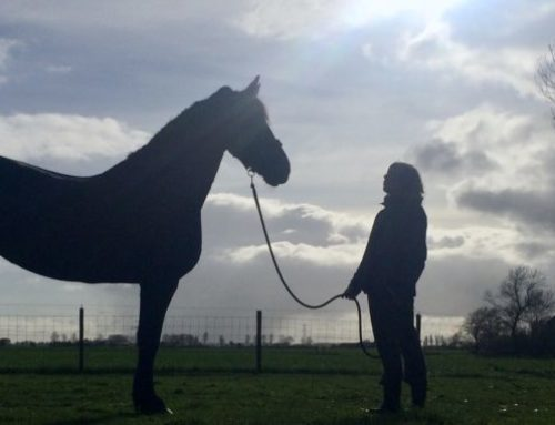 'Equine assisted' geschiedenis en kaders